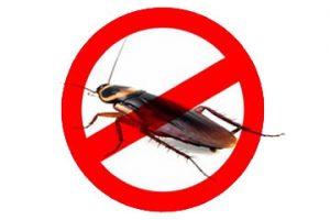 dedetização de baratas em curitiba