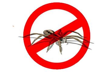 Dedetização de Aranhas em Curitiba