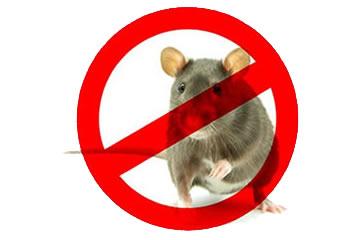 Ratos - Desratização em Curitiba